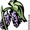 Vector Clipart image  of a mulberry