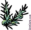 Vector Clipart picture  of a juniper
