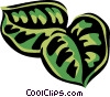 Vector Clipart graphic  of a prayer plant