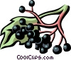 Vector Clipart image  of a elderberry
