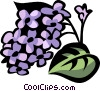 lilac Vector Clipart graphic