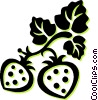 Vector Clip Art picture  of a strawberries