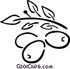 Vector Clipart graphic  of a olive