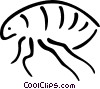 Vector Clipart image  of a Beetles