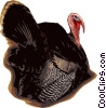 Turkeys Vector Clipart graphic