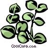 Vector Clip Art image  of a eucalyptus