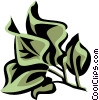 bougainvillea Vector Clipart illustration