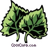 cottonwood Vector Clipart illustration