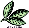 Vector Clipart image  of a hickory