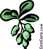 barberry Vector Clipart image