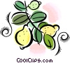 lemons Vector Clipart picture