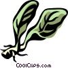 horseradish Vector Clip Art graphic