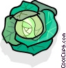 Vector Clip Art graphic  of a cabbage