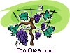 Vector Clipart graphic  of a grapes on the vine
