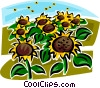 Field of sunflowers Vector Clipart image