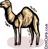 camel Vector Clip Art picture