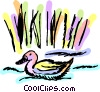 Ducks Vector Clipart illustration