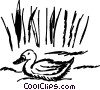 Vector Clip Art image  of a Ducks