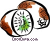 Vector Clipart picture  of a Kiwis