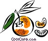 Vector Clipart image  of a Oranges