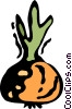 Vector Clip Art image  of a Turnips