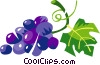 Vector Clipart image  of a grapes