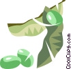 Vector Clip Art picture  of a peas