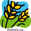 Vector Clip Art graphic  of a Unprocessed Grain