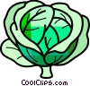 Vector Clip Art picture  of a Cabbage