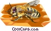 Carniolan Honeybee Vector Clipart illustration