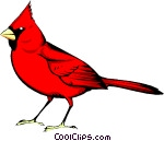 how to draw a realistic cardinal