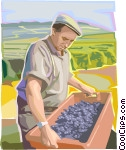 Farmer with grapes Clip Art