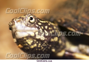 turtle Royalty Free Stock Photo Clipart wb033450