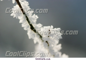 winter scene with tree branch Royalty Free Stock Photo Clipart wb043731