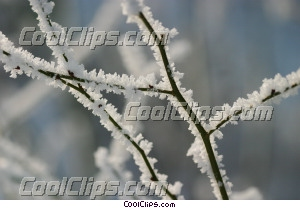 winter scene with tree branch Royalty Free Stock Photo Clipart wb043732