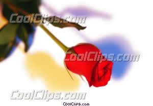rose Royalty Free Stock Photo Clipart wb044175