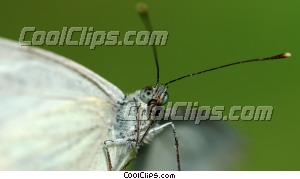 moth Royalty Free Stock Photo Clipart wb046113