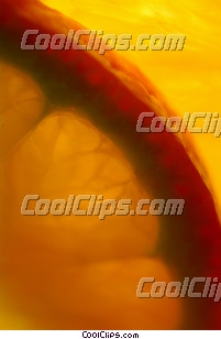 Orange slices Royalty Free Stock Photo Clipart wb046305