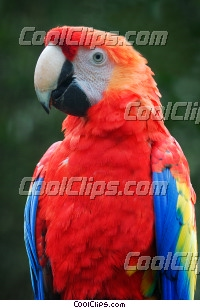 Bright Macaw Parrot