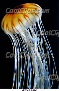 Jellyfish Close-Up