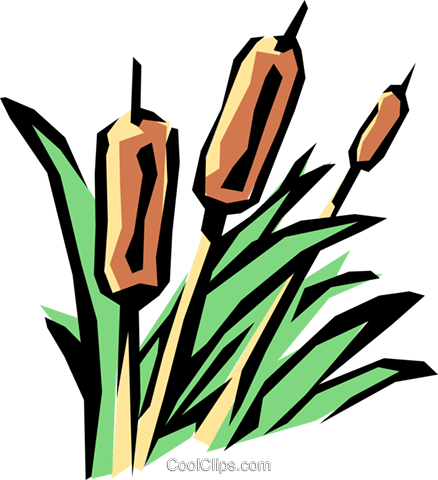 Bulrushes Royalty Free Vector Clip Art illustration natu0333