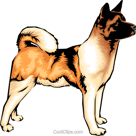 Akita dog Royalty Free Vector Clip Art illustration anim0031