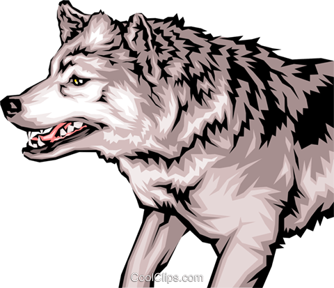 Growling wolf with mean looking teeth Royalty Free Vector Clip Art illustration anim0032