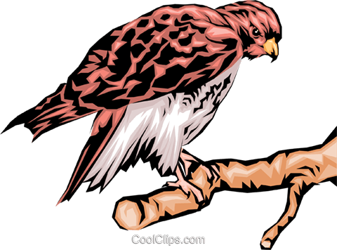 Eagle Royalty Free Vector Clip Art illustration anim0040