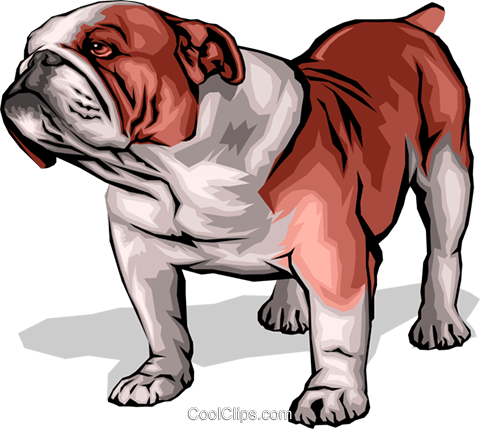 Bulldog Royalty Free Vector Clip Art illustration anim0043