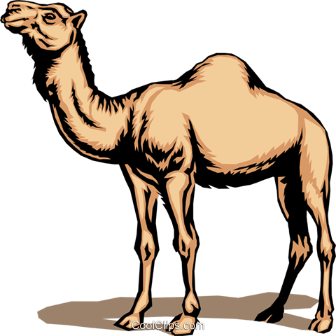 Camel Royalty Free Vector Clip Art illustration anim0048