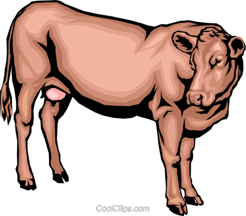 Dairy cow Royalty Free Vector Clip Art illustration anim0057
