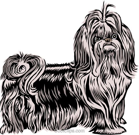 Shih Tzu dog Royalty Free Vector Clip Art illustration anim0071