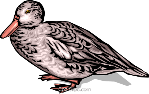 Duck Royalty Free Vector Clip Art illustration anim0079