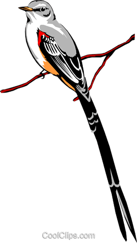 Scissor-tailed Flycatcher Royalty Free Vector Clip Art illustration anim0085